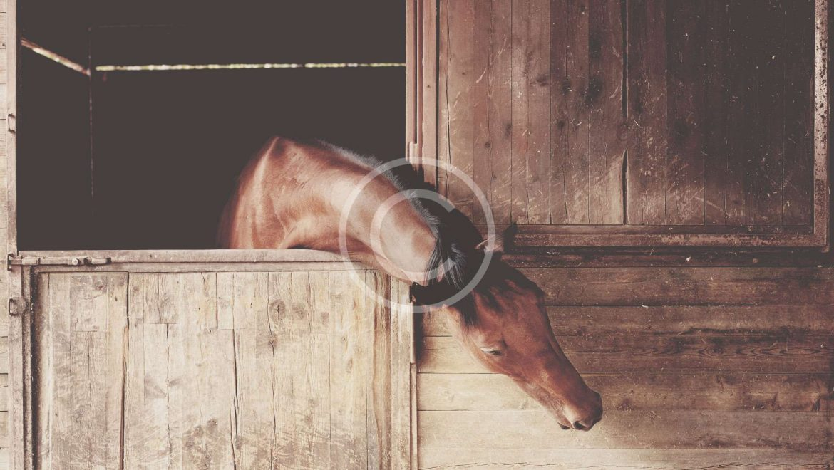 Horses Inspired More With Tasty Rewards